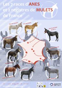 Carte ânes petit format