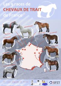 Carte chevaux de trait - petit format