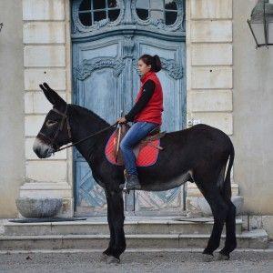 © ANR ânes et mulets des Pyrénées