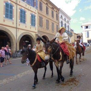 © ANR races mulassières du Poitou