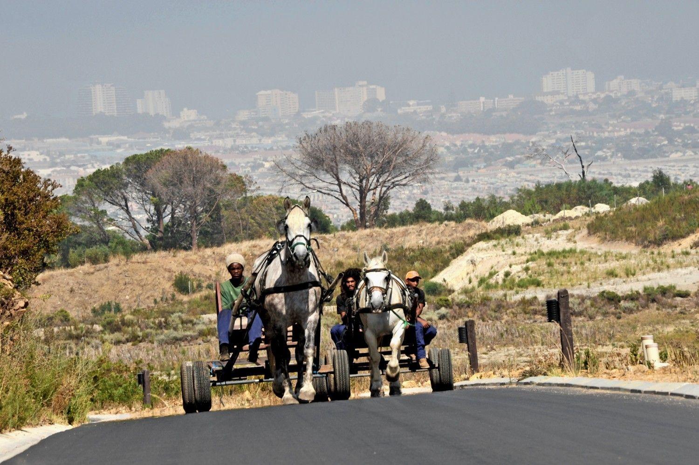 © JL Dugast - Traction animale équine en Afrique du Sud