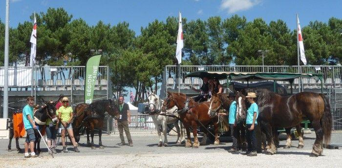 Equidés de travail Championnats d'Europe de Horse-Ball 2015