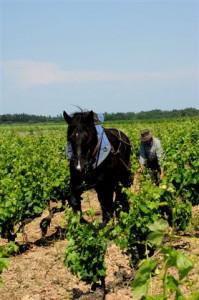 cheval vigneron